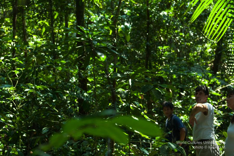Jungletrip-4.jpg