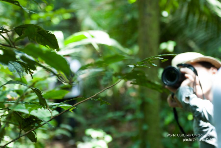 Jungletrip-9.jpg